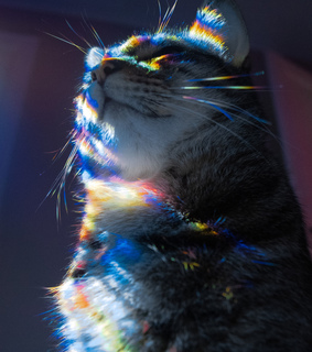 aesthetic, animals and cat