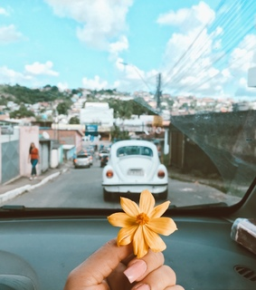 car, inspiration and bloom