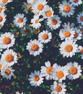 background, flowers and pretty