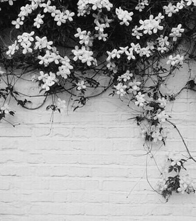 black and white, flowers and pretty