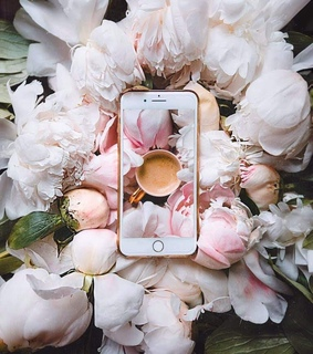 feed, flowes and wallpapers