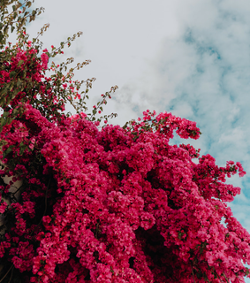 red, pink and flowers