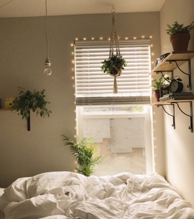 bed sheets, cozy and hanging plants