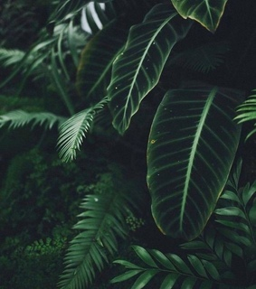 aesthetic, background and green