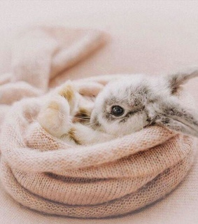 adorable, bunny and bunnies