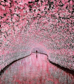 japan, beauitful and flowers