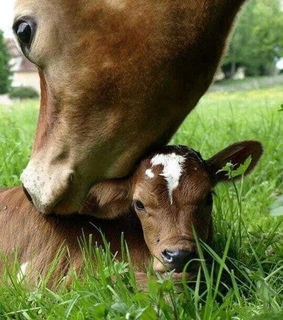 cute animals, cow and baby animals
