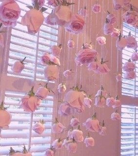 rosas, pink and aesthetic