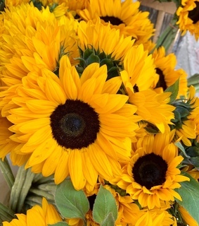 spring, sunflowers and weheartit