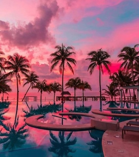 blue, palm trees and pink