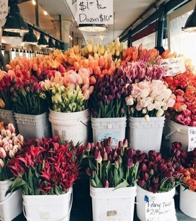 flower, tulips and nature