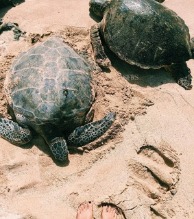 Animales, Tortuga and belleza