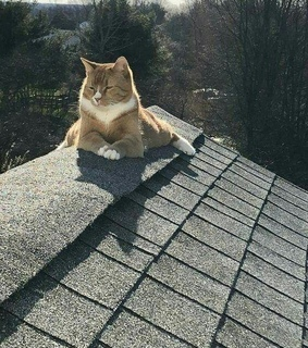 cats, basking and pet
