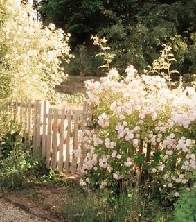 flowers, summertime and fence