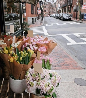 flowers, flower and flower shop