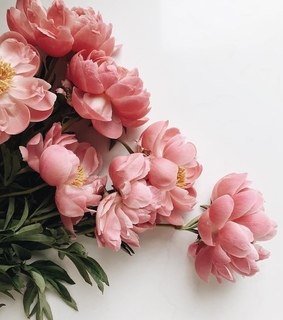 lifestyle, pink peonies and pretty