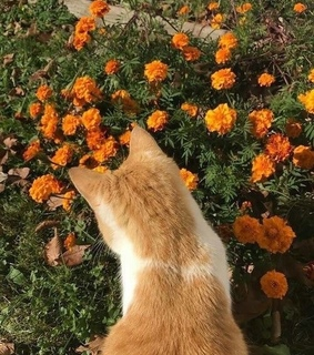cat, flowers and f