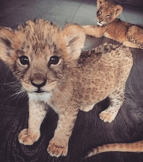 animals, baby and cute