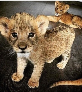 animals, beautiful and cute
