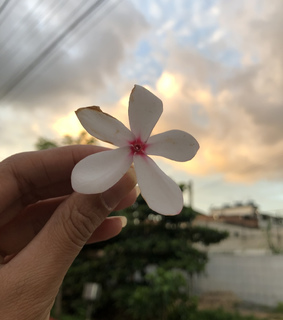 nature photography, bloom and sunset