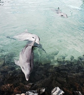 animals, beach and dolphins