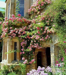 roses, rose garden and beautiful