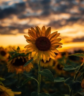 aesthetic, amarillo and flower