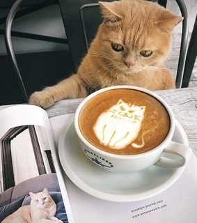 Animais, cat and coffe