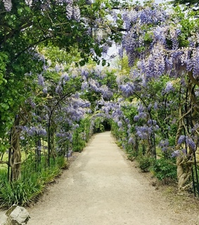 flowers, garden and wisteria