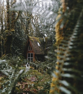 cabin, cozy and nature
