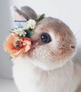 adorable, bunny and cute