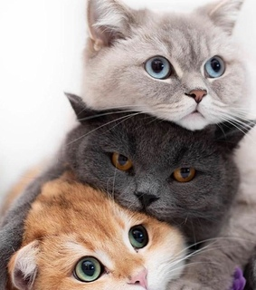 cute animals, cats and kitten