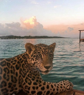 sea, cheeta and animals