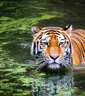 animals, beauty and wild