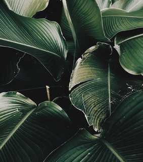 background, calm and green