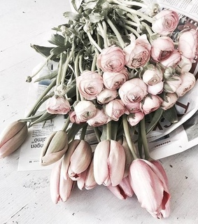 aesthetic, flowers and flowers shop