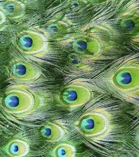 green, feather and pluma