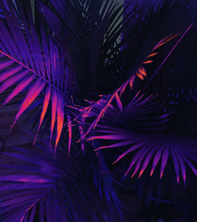 coconut tree, color and couleur
