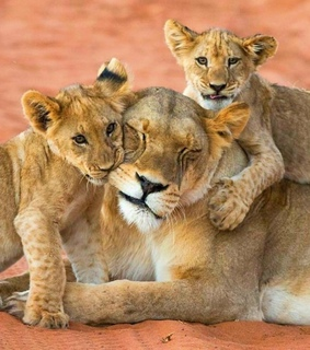 Animales, belleza and cute