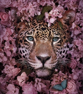 Animales, leopardo and tumblr