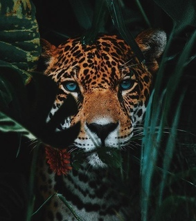 art, animals and leopardo