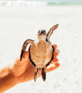Animales, Tortuga and animals