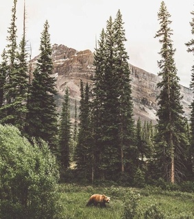 Animales, nature and bear
