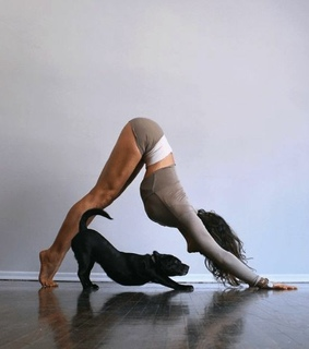 yoga, cute and puppie
