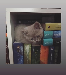animals and books, books and cat