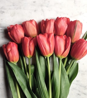 flowers and tulips