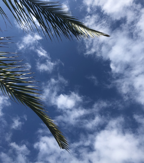 clouds, palm tree and sky