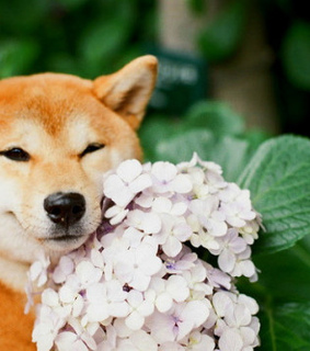 flowers, adoptdontbuy and naocompreadote