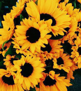 aesthetic, pretty and sunflowers