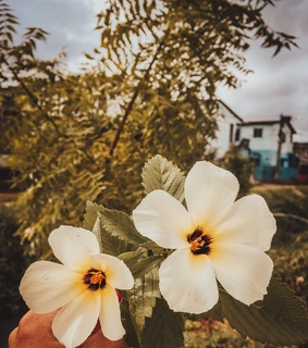 bloom, feed and flowers